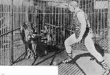 Picture relating to Brisbane - titled 'Herr Pagel ready to tackle the lion at Wirth's Circus, Brisbane, 1903'