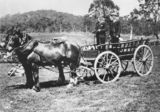 Picture relating to Queensland - titled 'Two men on a horse and cart'