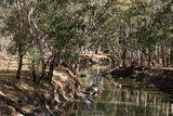Picture relating to Yanco Creek - titled 'Yanco Creek'