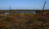 Picture relating to Jurien Bay - titled 'Sand plain wetland, Jurien Bay WA'