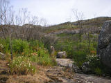 Picture relating to Porongurup National Park - titled 'Plenty of fresh regrowth two years after fire'