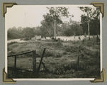 Picture relating to Wooloowin - titled 'Floodwaters in the area of Kalinga Park, Wooloowin, Brisbane, 1950'