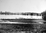 Picture relating to Canberra - titled 'View across flood waters towards Hotel Canberra'