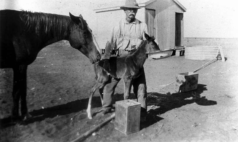 Picture of / about 'Winton' Queensland - Charles Stewart feeding a horse and foal at Cooinda Station