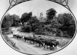 Picture of / about 'Canungra' Queensland - Bullock drays crossing the Canungra Creek at the Canungra Crossing