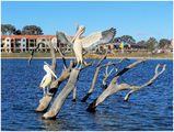 Picture relating to Gungahlin - titled 'Pelican Sculpture - Gungahlin - ACT'