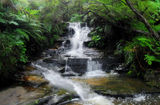 Picture relating to Leura - titled 'Leura Cascades'