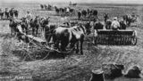 Picture relating to Queensland - titled 'Horse drawn ploughs planting wheat in Queensland, 1900-1910'