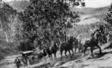 Picture relating to Julatten - titled 'Horse team assists car over Slatey Pinch on Queensland's Bump Road, ca. 1930'