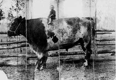 Picture of / about 'Nanango' Queensland - Young girl posing on top of a large bull at Two Mile Station, Nanango, Queensland
