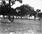 Picture relating to Red Hill - titled 'Camp at Red Hill, now Latrobe Park, Deakin.'