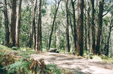 Picture relating to Mount Buangor State Park - titled 'Mount Buangor State Park: Ferntree Camp Ground'