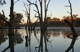Picture relating to Murray River - titled 'Murray River'