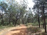 Picture relating to Ganmain State Forest - titled 'Ganmain State Forest'
