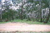 Picture relating to Mount Alexander Regional Park - titled 'Mount Alexander Regional Park; Koala Park camp ground'