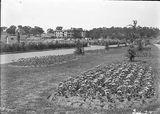 Picture relating to Canberra - titled 'Beds of tulips in the plantation outside Hotel Canberra - West Block in background'