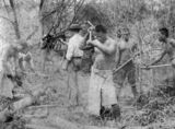 Picture relating to Farnborough - titled 'South Sea Islander labourers clearing land at Farnborough, Queensland, ca. 1895'