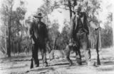 Picture of / about 'Perthton' Queensland - Hunters posing with a dingo carcas in Perthton, 1940