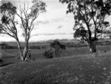 Picture relating to Brindabella - titled 'Panorama of snow on the Brindabellas, from Red Hill over Woden valley.'