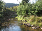 Picture of / about 'Cotter River' the Australian Capital Territory - Cotter River just downstream from Vanities Crossing