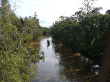 Picture of / about 'Lachlan River' New South Wales - Lachlan River at Paytens Bridge