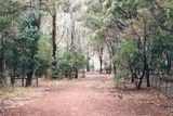 Picture relating to Lake Eildon National Park - titled 'Lake Eildon National Park; Devils Cove Camp Ground'