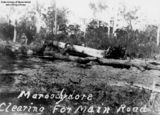 Picture relating to Maroochydore - titled 'Clearing trees at Maroochydore, Queensland. ca.1925'
