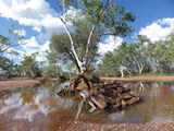 Picture relating to Newman - titled 'Newman ~ Fortescue River.'