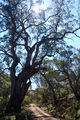 Picture of / about 'Yanununbeyan National Park' New South Wales - Woolcara Lane - Yanununbeyan National Park