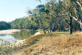 Picture relating to Cobram East - titled 'Cobram East: Murray Rv Reserves - Dicks Bend'
