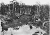 Picture relating to Yandina - titled 'Bush track from Yandina to the settlements at Maroochy, ca.1897'