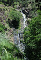 Picture relating to Kondalilla Falls - titled 'Kondalilla Falls'