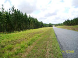 Picture of / about 'Byfield State Forest' Queensland - Byfield State Forest