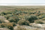 Picture of / about 'Oodnadatta Track' South Australia - Oodnadatta Track