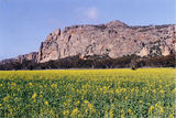 Picture relating to Mount Arapiles - titled 'Mount Arapiles'