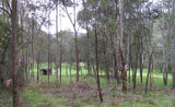 Picture relating to Buckland River - titled 'Buckland River State Forest Camp Ground'