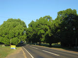 Picture relating to Blackbutt - titled 'Blackbutt D'Aguliar highway'