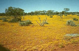 Picture relating to Gibson Desert Nature Reserve - titled 'Gibson Desert Nature Reserve'