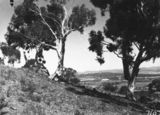 Picture relating to Ainslie - titled 'Distant view of Old Parliament House from Mt Ainslie'