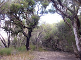 Picture relating to Yeal Nature Reserve - titled 'Yeal Nature Reserve'