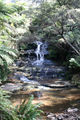 Picture relating to Leura - titled 'The Cascades at Leura'