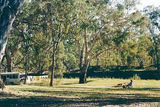 Picture relating to Gooramadda - titled 'Gooramadda Murray River Reserves - Police Paddocks'