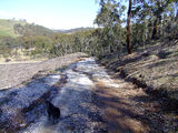 Picture of / about 'Dog Rocks State Forest' New South Wales - Dog Rocks State Forest - elevation 1021m