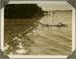 Picture relating to Bundaberg - titled 'Dead fish floating in the river after the distillery fire, Bundaberg, 1936'
