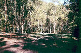 Picture of / about 'Allenvale' Victoria - Allenvale, Angahook-Lorne State Park, Allenvale Mill Camp Ground