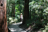 Picture of / about 'Montville' Queensland - Montville