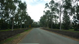 Picture of / about 'Buronga' New South Wales and Victoria - The Australian Inland Botanic Gardens
