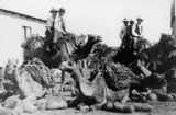 Picture relating to Cloncurry - titled 'Camel riding at Cloncurry, ca. 1907'
