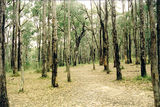 Picture relating to Bunyip State Park - titled 'Bunyip State Park: Old Tynong Camp'