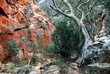 Picture relating to Telowie Gorge Conservation Park - titled 'Telowie Gorge Conservation Park'